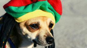 Os cães preferem o reggae, diz estudo-image