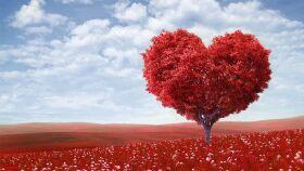 Hoje é o dia de São Valentim-image