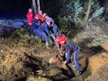 Bombeiros resgatam cavalo preso em águas fluviais-image