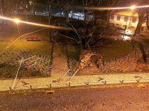 Quedas de árvores e duas pessoas desalojadas em Santo Tiro-image