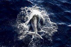 Vírus está a matar golfinhos desde novembro-image