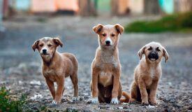 Sabia que o seu cão pode ter problemas nas gengivas?-image