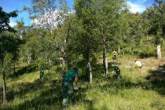 Governo adia aplicação de coimas sobre limpeza de terrenos-image
