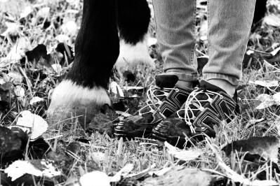 O menino e os cavalos