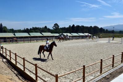 Vaga para treinador de equitação