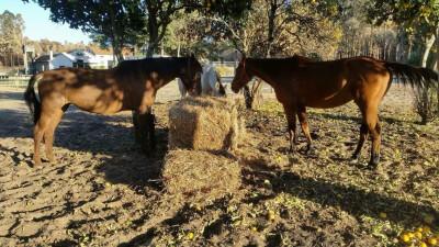 Ajuda para os cavalos na zona dos fogos