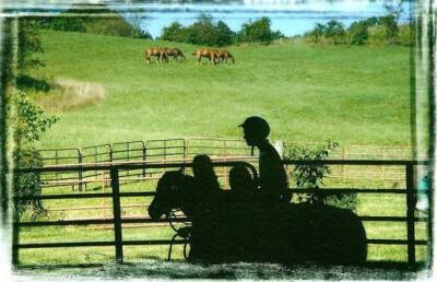 O cavalo como meio terapêutico: montado e engatado
