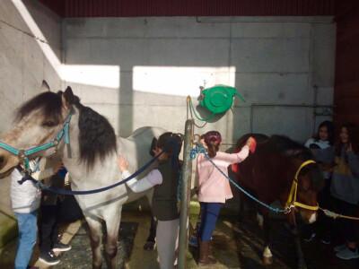 Pony Club do Porto com nova casa