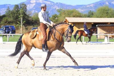 Europeu do Cavalo Ibérico