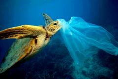 Microplásticos. O que são e como acabar com eles?-image
