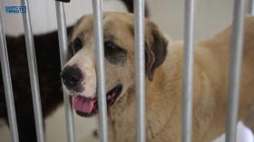 Campanha de adoção no Dia do Animal-image