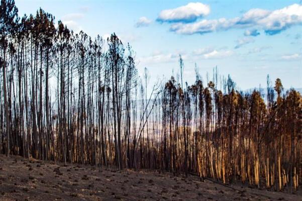 eucalipto-provoca-dramatica-reducao-da-biodiversidade-image