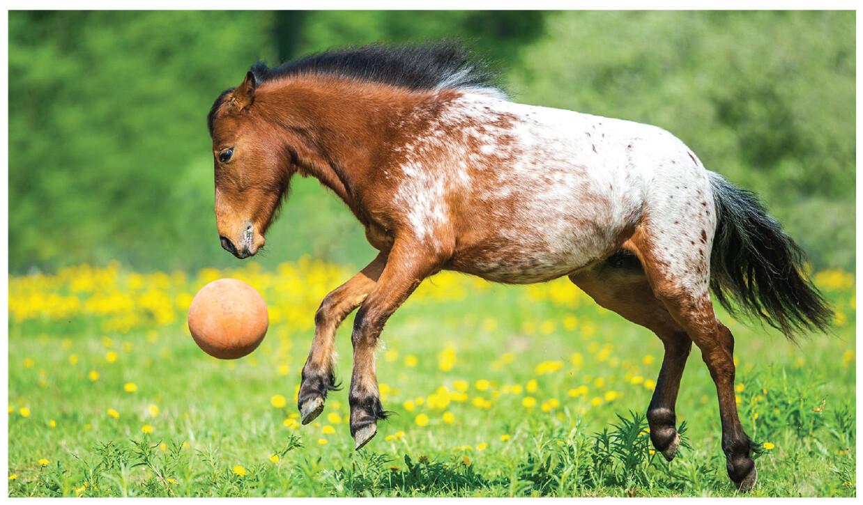 Descreva o cavalo