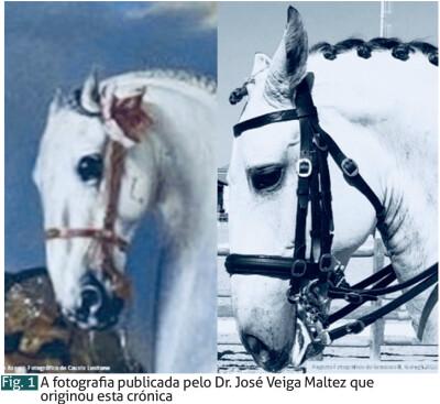 Os cavalos à antiga com cabeça pequena e orelhas curtas