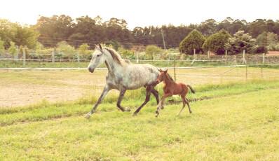 Influência do fotoperíodo nos equinos