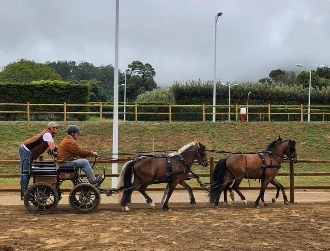 Treino Atrelagem Açores