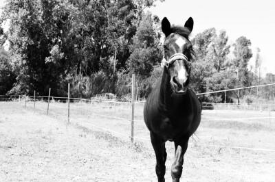 Um cavalo feliz que dá sorte
