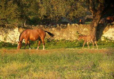 Efeitos da vida intrauterina no desenvolvimento pré-natal em cavalos